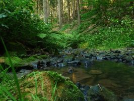 The valleys of Lothlorien 6 by Dragoroth-stock