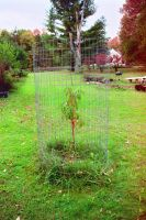 Baby Tree Cage by Chaindive