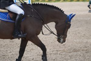 Bay Horse - Show Jumping Stock 9.19 by MagicLecktra