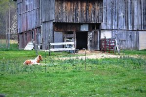 Pretty Horse in Front of Rustic Barn 2 by SeeThruMineEyes