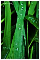 Drops From Heaven by erbphotography