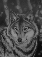 Wolf by casia85