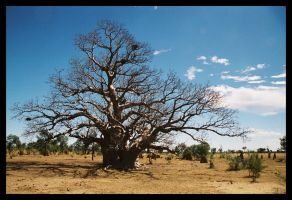 Boab and termite mounds by wildplaces