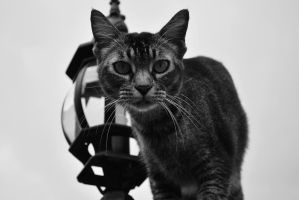 That's Not Cool by Flamix