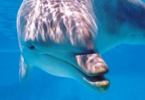 curious dolphin. by annlo13