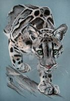 Clouded Leopard by MaddRaVen