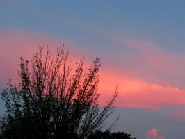 Pinkness in the Sky by Michies-Photographyy