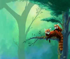 Red Pandas by Atolm