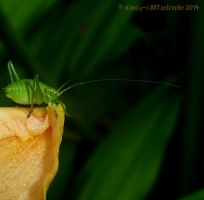 Lilly Cricket by dandy-cARTastrophe