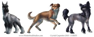 Dog Breeds - Part One by soulofwinter