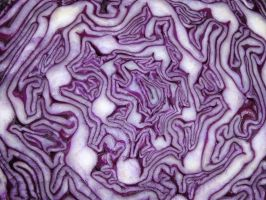 Red Cabbage by tangledfrog