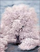 Magic Tree II infrared... by MichiLauke