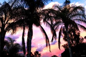 Palms Australian Sky Screen Saver 3000x2000 by GrahamSurferAndrews