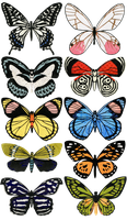 Butterfly Collection 2 by Solinni