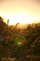 End Of Summer by Estelle-Photographie