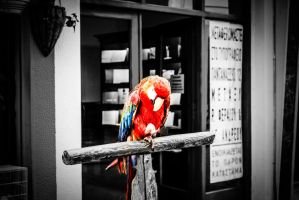 Selective Multi Coloured Parrot by JapeKing