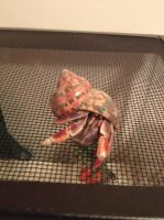 Hermit Crab Stock 2 by jackiehorse