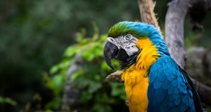 Vibrant Feathers by Mckronic