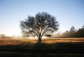 My tree - this morning by Heidipickels