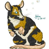 Calico Rat- Calcifur by Aydengryphongirl