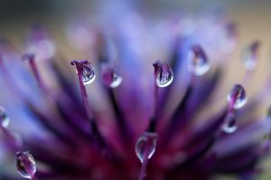 Striped Rain Drops by Jenni77
