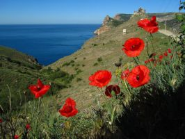 Poppies in Balaclava by Mari-Ghostly