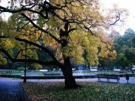 Autumn in park... by MASYON