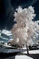 .: Bosbury Infrared II :. by Dave-Ellis