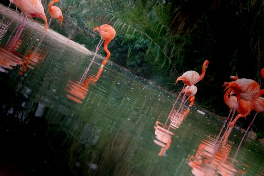 Flamingos by R-3ality