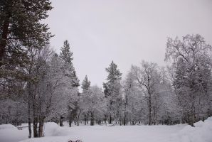 Winter Background by LimeStock