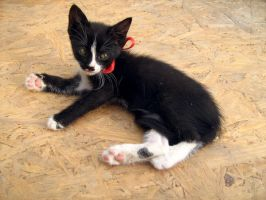 kitten with red bow by Alcadeea