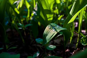 Lily of the Valley by aryss-skahara