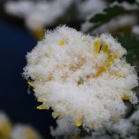 First snow: :1 by Ilharess