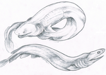 Frilled Sharks by Serphire