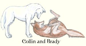 Collin and Brady wolves :D by LiannexSupernatural