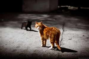 Stray Cats by Dr-Stein