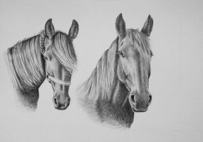 Two friesians by Horsenart95
