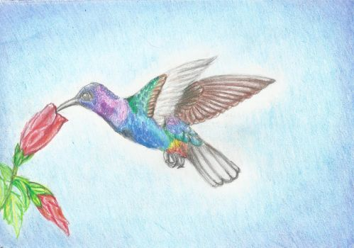 ID Hummingbird Rainbow by light-peace
