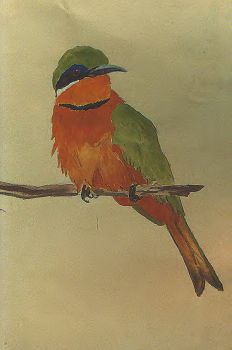 bee-eater by Wingnut55