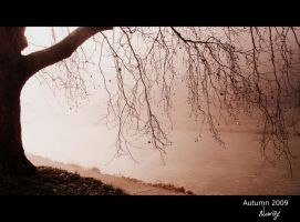 In the morning mist by niwaj
