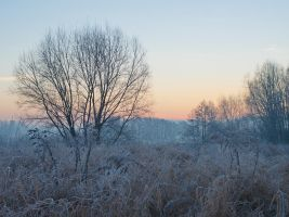 Hoarfrost by starykocur