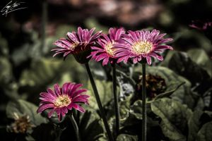 Pre-Weathered Plants by SevenPhotoDFW