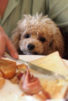 Pass the Bacon Please by PoodleSchmoodle