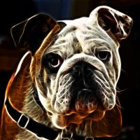 Bulldog Fractal by JPeiro
