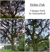 Holm Oak Pack by XiuLanStock