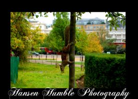 Squirrel by Humble-Photography