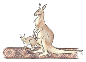 Kangaroo And Joey by WildSpiritWolf