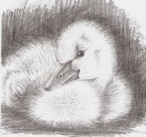 duckling by RavenLou