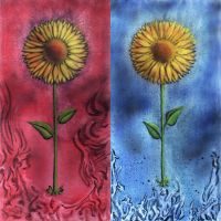 Sunflowers by bdec