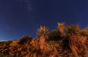 Aloes in the Karoo by carlosthe